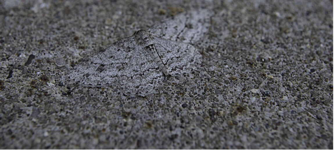 Hidden Gems  Nature Photography Animal Camouflage Animal Themes Camouflage Close-up Concrete Day Motion Nature No People Outdoors Textured  Perspectives On Nature