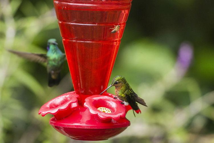 Close-up of red ladybug on a bird feeder