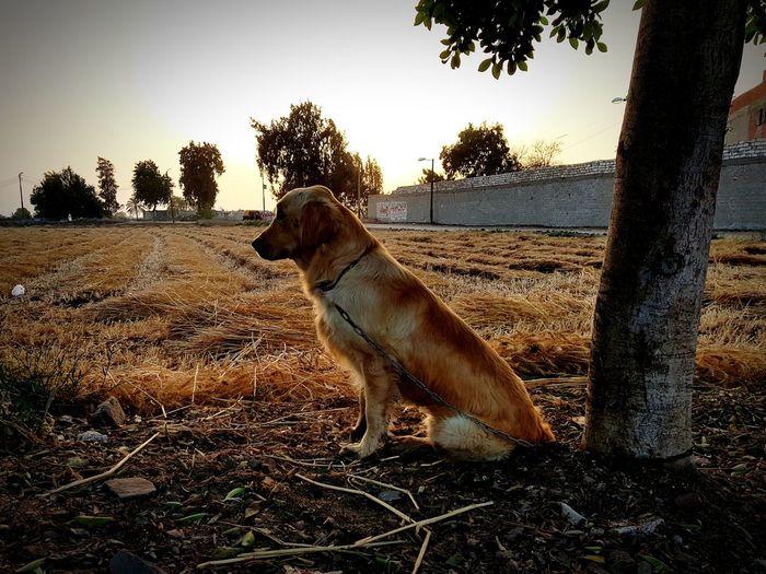 Tree Pets Dog Animal Themes Sky