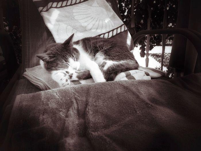 Cozy Relaxing