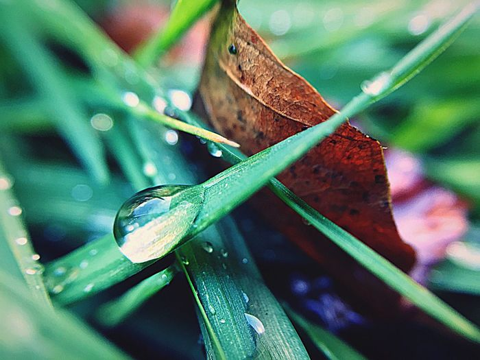 Blade Of Grass After The Rain Green Color Close-up Focus On Foreground Selective Focus Leaf