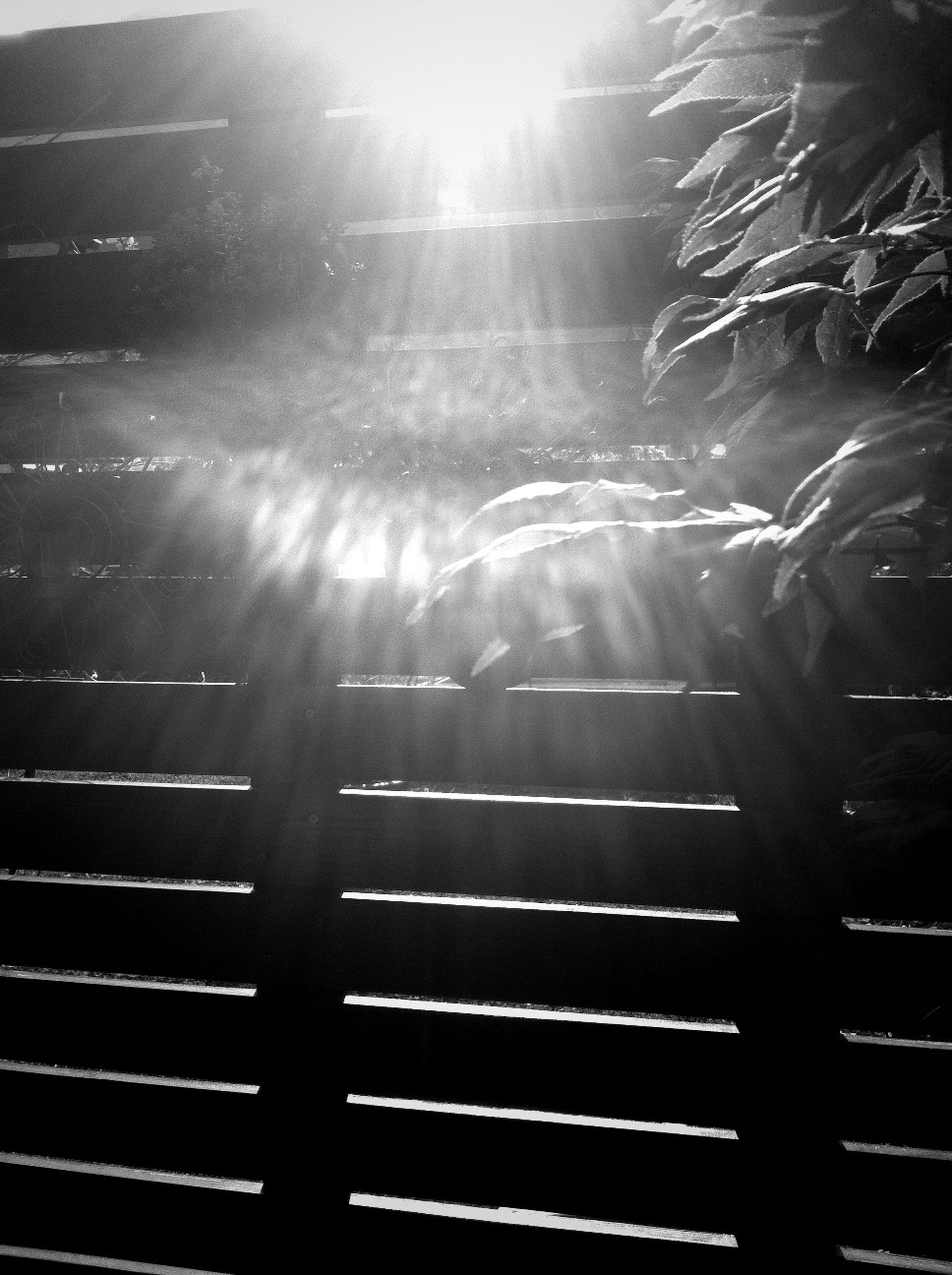 sunbeam, sunlight, fence, sun, lens flare, railing, nature, bright, protection, sunny, outdoors, pattern, no people, tree, tranquility, day, safety, growth, beauty in nature, sky