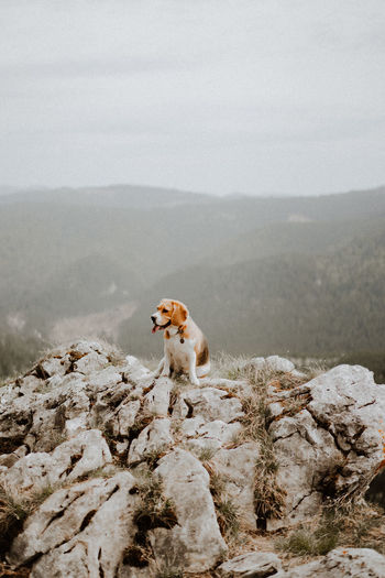 Dog on rock in mountains