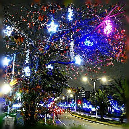 ✨ クリスマスイルミネーション🎶☺ Christmas illuminations🎶☺ ※ ※ 風景 Landscape イルミネーション Illumination 名古屋港 Port_of_Nagoya 日本 Japan Aichi 眺め 眺望 View 展望 Outlook Vista 景色 Scenery 綺麗 Beautiful 爽やか Refreshing ✨ View_Japan_nagoya_mitu Let'therebelight