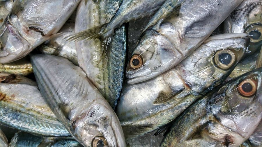 Vertebrate Fish Seafood Food And Drink Full Frame Animal Food Freshness For Sale Backgrounds Wellbeing Retail  Close-up Market Healthy Eating Raw Food No People Abundance Large Group Of Objects Fish Market Retail Display Sale Fishing Industry