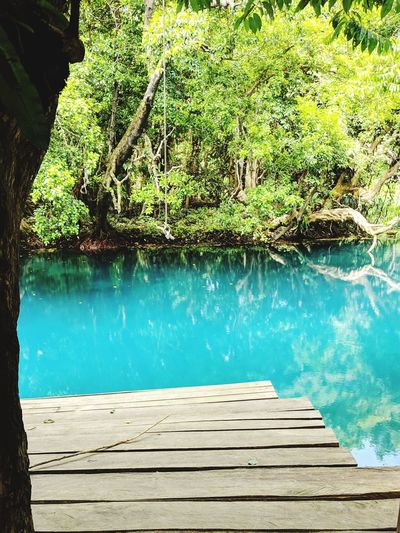 Water Tree Swimming Pool Lake Turquoise Colored Tranquility Turquoise Tranquil Scene Standing Water Idyllic Non-urban Scene Scenics