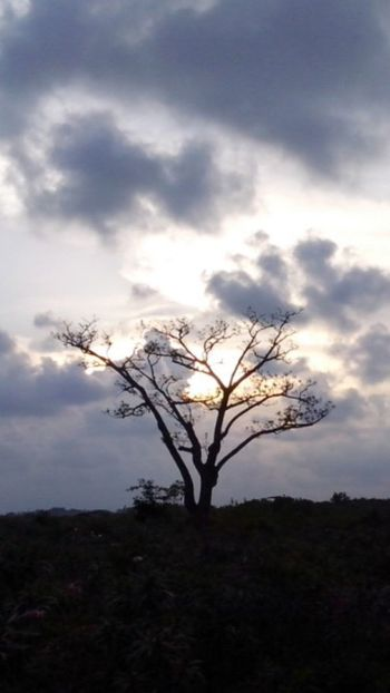 This photo is like my mood today Hugging A Tree Alone Tree Nonfilter Cloudy Sky Sunset Clouds And Sky Sunset Cloudy Sunset_collection Taking Photos