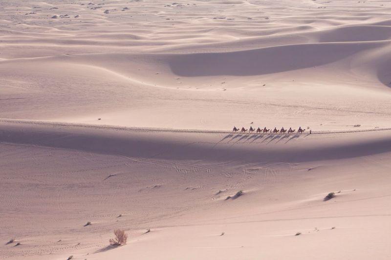 A camel caravan in Gansu, China. The Explorer - 2014 EyeEm Awards ASIA Traveling In China