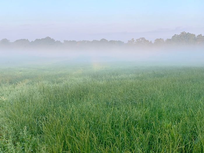 Foggy Morning Foggy Fog Plant Beauty In Nature Environment Land Landscape Tranquil Scene Tranquility Growth Scenics - Nature Field Nature Sky Tree No People Fog Green Color Rural Scene Agriculture Day Outdoors