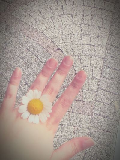 Daisy Flower Beauty Hello World Sweet Ring Openday Istanbul