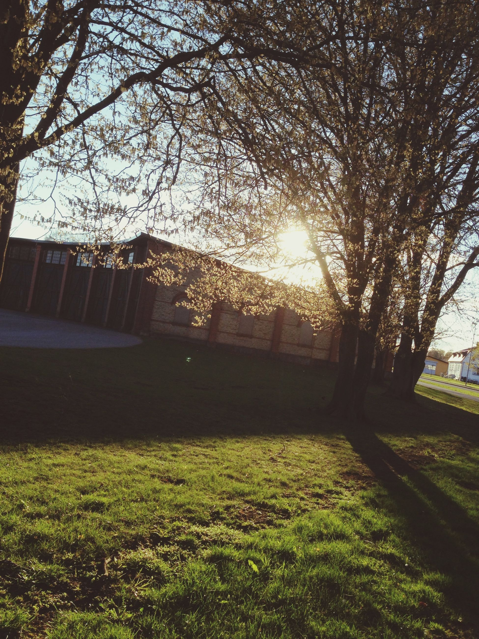 tree, grass, sun, sunlight, sunbeam, branch, growth, park - man made space, lens flare, built structure, tranquility, nature, architecture, sky, building exterior, field, lawn, shadow, beauty in nature, tranquil scene