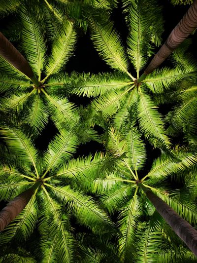 Directly below shot of palm tree leaves