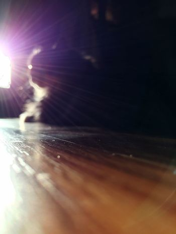 Sunlight And Shadow Sunrays Sunray Sunlight, Shades And Shadows Sunlight Sunlight ☀ Showcase March Vscocam Photographer Photography Outoffocus Backgrounddefocus Background Defocus VSCO VSCO Cam Vscogood Sunset Silhouettes Sunset_collection Sunset Silhouette Sunshine Cat Cats Wood Floor Interior Views