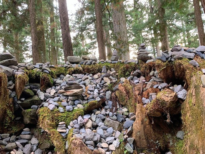 Stack of rocks in forest