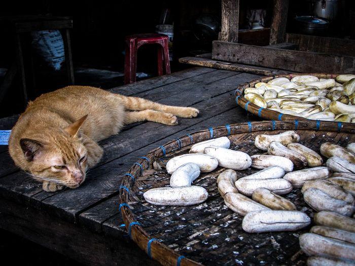 Banana EyeEmNewHere Animal Themes Day Domestic Animals Domestic Cat Feline Food Indoors  Mammal No People One Animal Pets