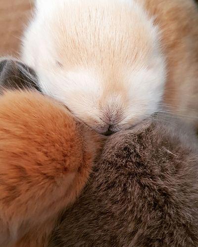 Babies Rabbit