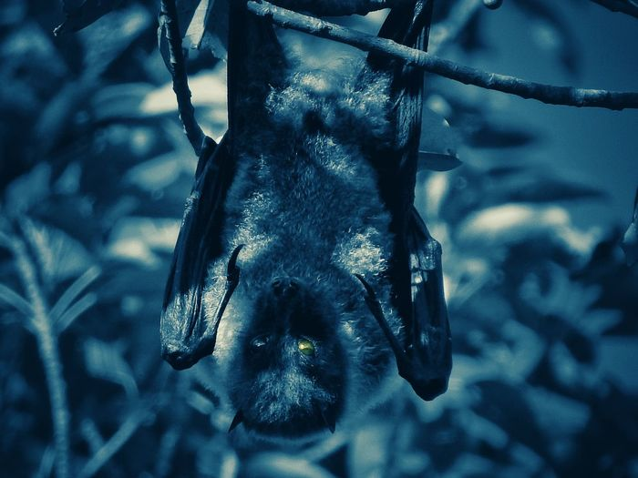 Summernight of vision Bat Hanging Tree Nature Beauty In Nature Animal Wildlife Close-up Outdoors Day Entertainment Been There. Done That. Visual Creativity