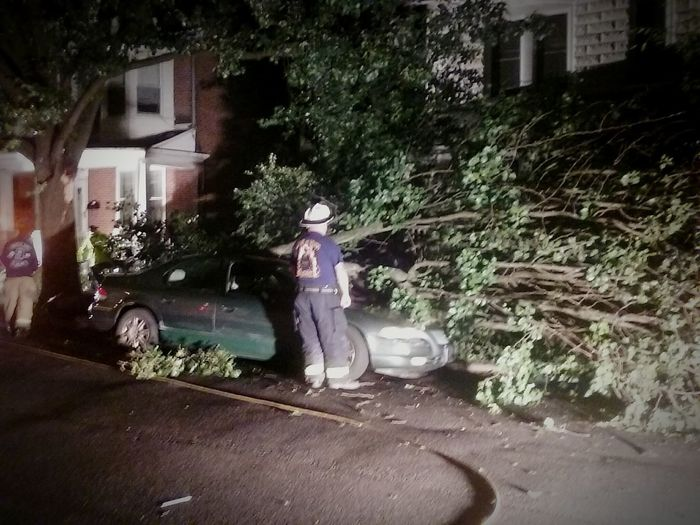 Overnight Success Road Transportation Side View Car Street Residential Building Outdoors Night View Tree_collection  Fallen Tree Roadside Tree Photos By Jeanette At Home