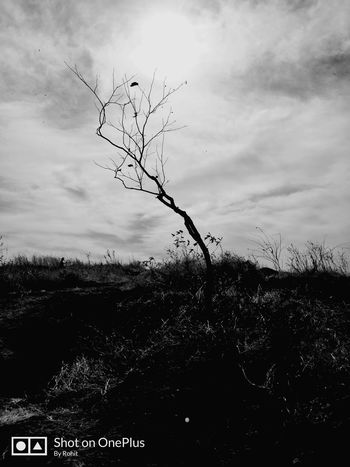 nature Nature Sun Sky Beautiful Grass EyEmNewHere Blackandwhite Awesome Awesome_nature_shots Spontaneous OnePlus 5t Mobilephotography