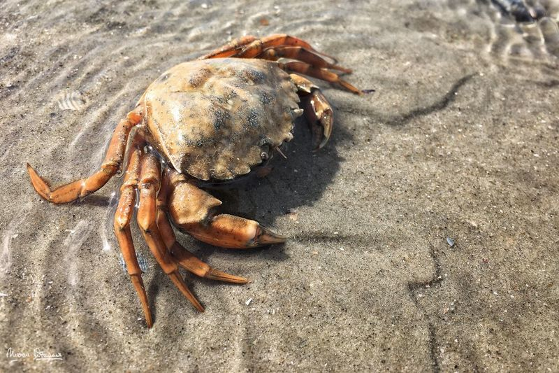 What a crab!