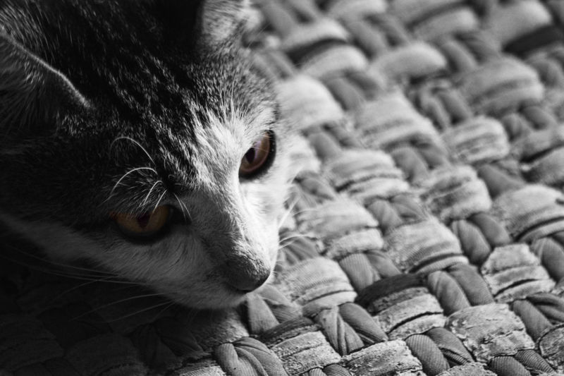 Cat on the carpet Animals In The Wild BW_photography Mood Captures Animal Animal Head  Animal Photography Animal Themes Blackandwhite Bw Bw_collection Cat Close-up Day Domestic Animals Domestic Cat Feline Hewan Kucing Mammal Mood No People One Animal Pets Portrait Whisker EyeEmNewHere