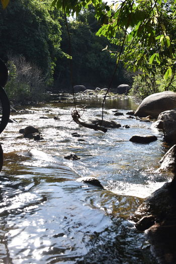 Scenic view of river stream in forest