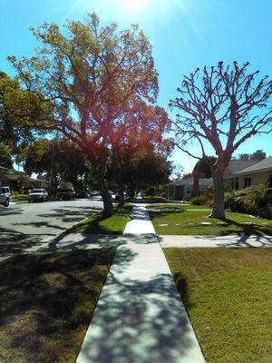 Outdoor Photography Photography Taking Photos Walking Around Long Beach, California USA  California Enjoying Life