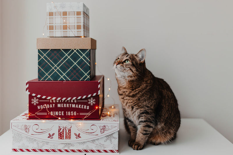 Full length of cat sitting by stacked christmas gift against wall at home