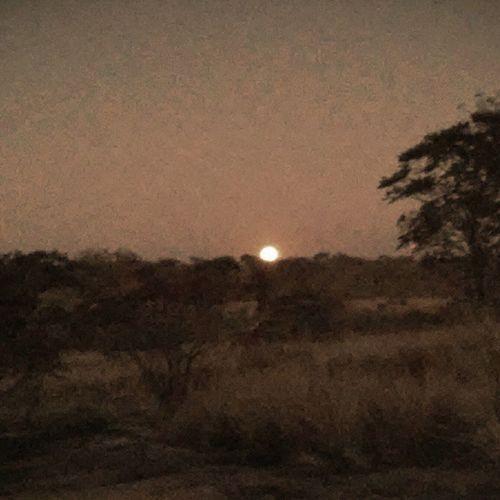Sunset in zim. Zimbabwe Wild BULAWAYO Victoriafalls sunset trees veld bush sun sky 2014 roadtrip botswana travelling africa lifeinafrica wilderness