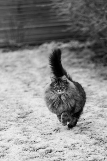 Close-up of cat running