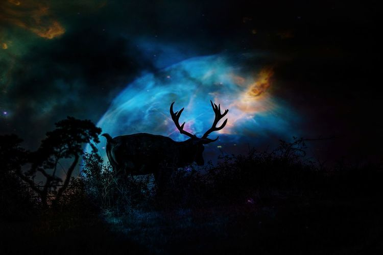 Silhouette of deer against sky at night