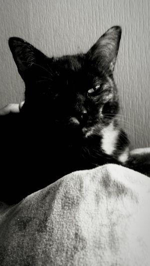 Pets Cat♡ One