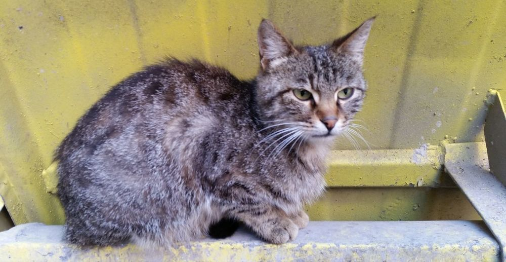 Cat Daytime Domestic Animal Pet Animal Sitting Cat Street Cat Tabby Cat Whiskers Animal_collection Animals Animal Photography Animal Theme