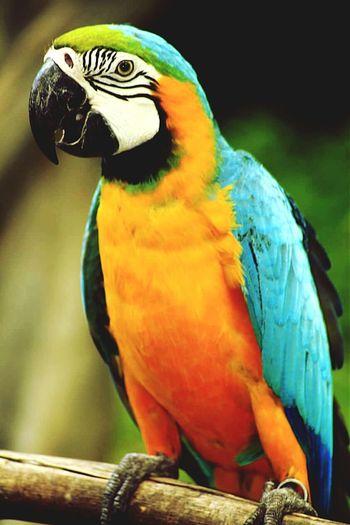 Animal Bird Bird Photography Bali Birdspark INDONESIA Eyeemindonesia Eyeemnesia