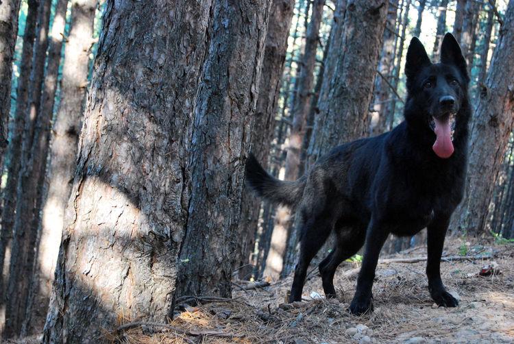 Black dog lying down on tree trunk