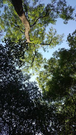 Despues de correr, lo que uno se encuentra. Cdmx XperiaZ1 Verde Arboles Naturaleza EnLaMañana