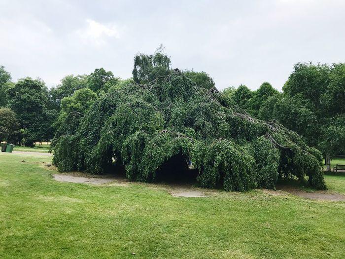 Bigtree Plant