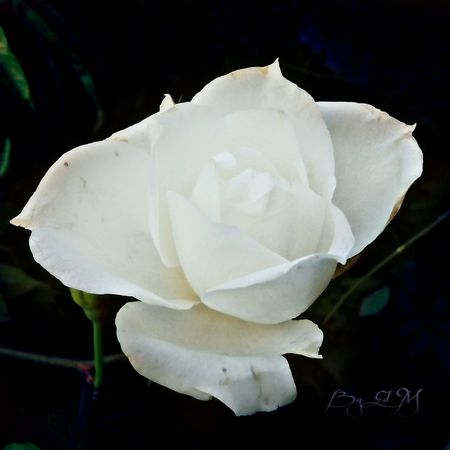 Photography Garden Of Everyting Nature Mexico To You Flowers Puebla Plants Flor Para Ti Skin Of The Night