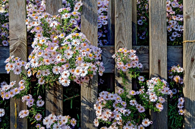 View of flowering plants against wooden fence