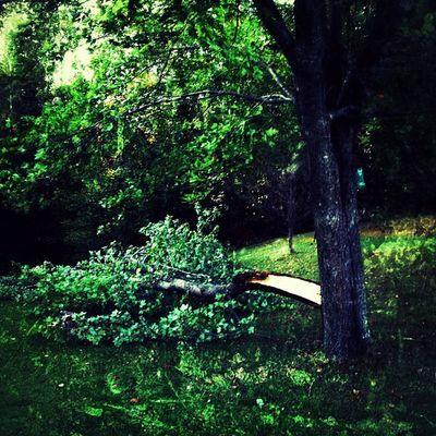 Timbeeeeeeeeeer!! Another Storm Casualty. #miltonvt #vt Instagood Webstagram Vt Tree 802 Dead Miltonvt Storm Igharjit Iphoneonly Vt_scene Photooftheday Vermont_scene Rainstorm Igvermont Picoftheday Igvt Vermont Instagramjit Branch Casualty Timber Instamood Storm_damage Bestoftheday
