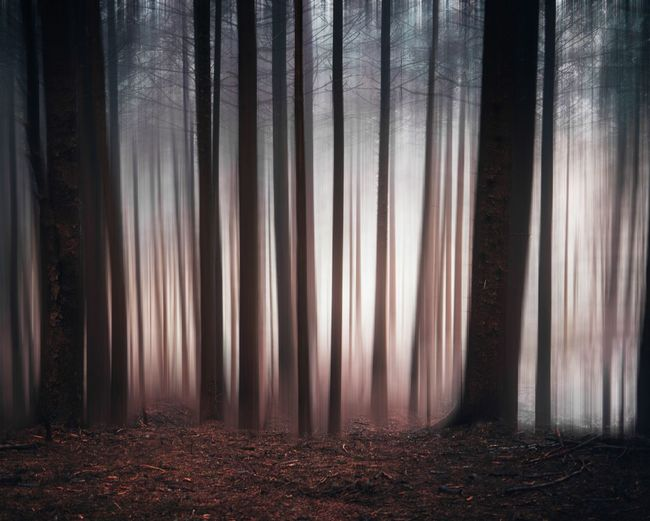 Panoramic shot of trees hanging in forest