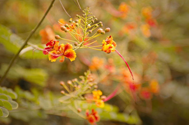 Nature Plant Outdoors Close-up Flower Photography Beauty In Nature Atmospheric Mood