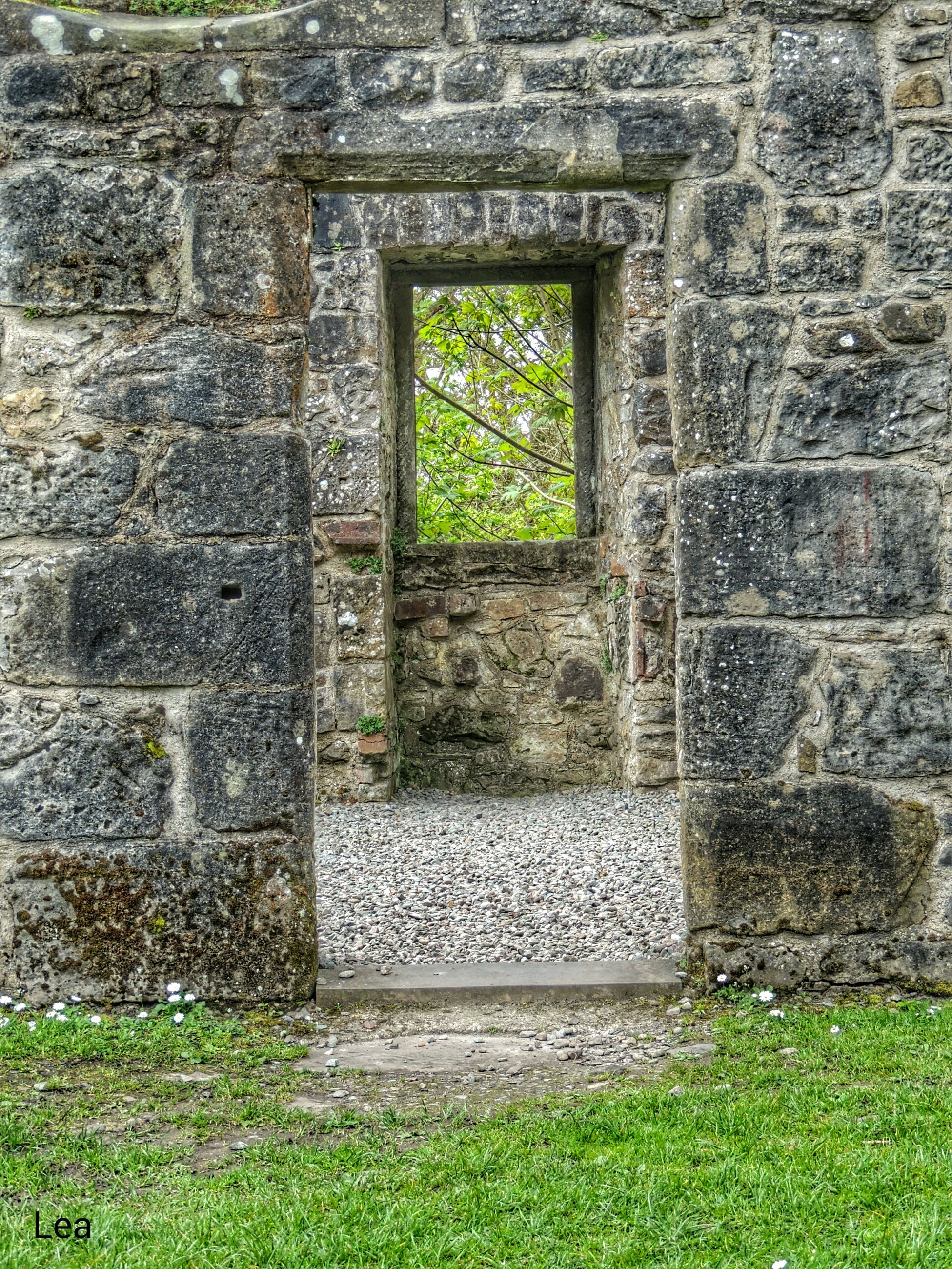 architecture, built structure, window, grass, green color, building exterior, wall - building feature, day, stone wall, plant, no people, history, old, sunlight, outdoors, stone material, growth, wall, pattern, brick wall