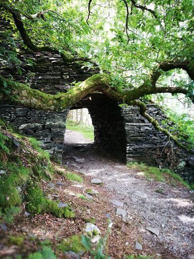 Wales Wales UK Tree Scene Tomb Raider  Tunnel