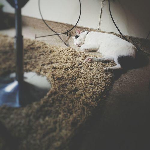 Sleeping Cat Cat♡