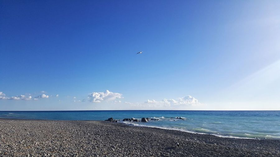 EyeEm Nature Lover Sea Bird Beach Horizon Over Water Nature Beauty In Nature Day Water Sky Animals In The Wild Outdoors Blue Animal Wildlife Animal Themes Scenics No People Flying Tranquility Clear Sky Vallecrosia Italy