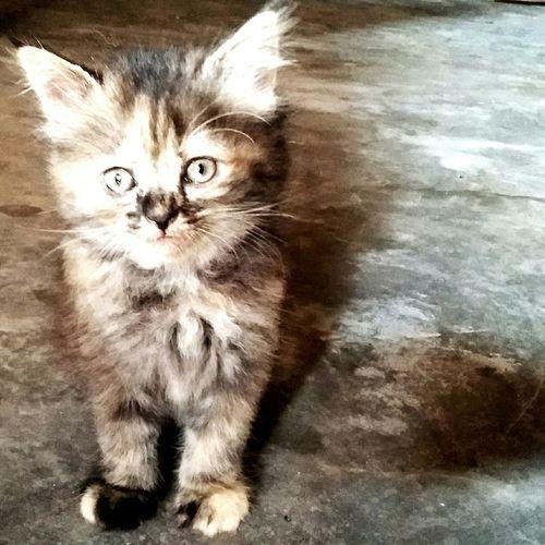 Cat Catofmylife Ilovemycat Cats Of EyeEm Catportrait Catoftheday Cat♡