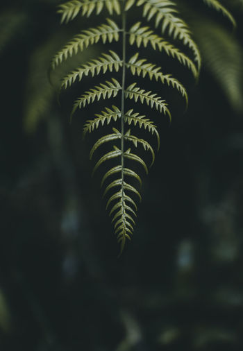Nature Nature Photography Beauty In Nature Close-up Day Focus On Foreground Green Color Growth Leaf Leaves Natural Pattern Nature Nature_collection No People Outdoors Palm Leaf Pattern Photo Photography Photooftheday Plant Plant Part Selective Focus Tranquility