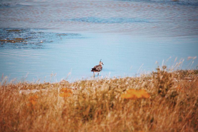 Bird perching at lakeshore