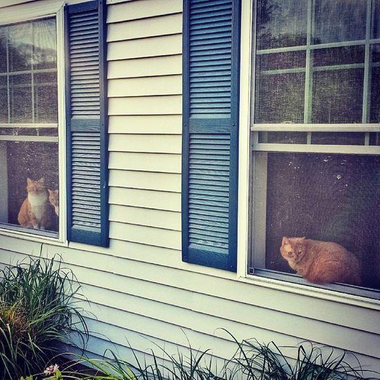They're always watching. Catlady Catstagram Catsofinstagram